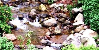Natural Stream of Vidya Niwas, Dharamsala