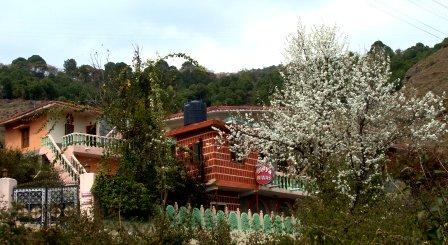 Vidya niwas, Dharamsala Hotels