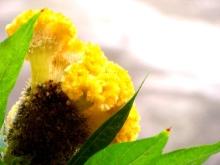 Yellow Delight Vidya Niwas